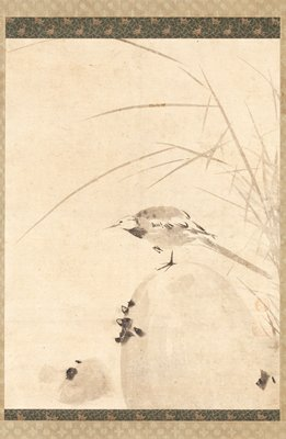 small bird with long tail standing on one leg on a rounded rock; bird is facing L; sprig of reeds in background at R