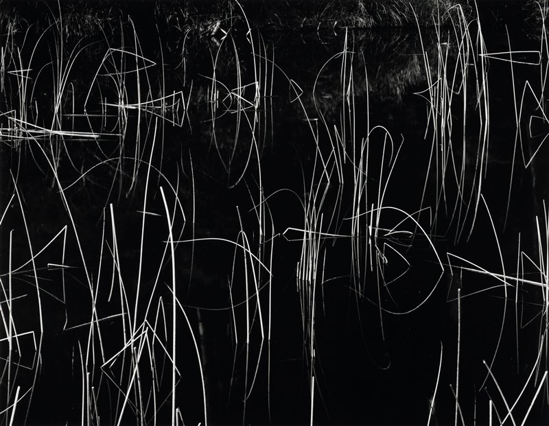 thin, leafless reeds extending up from calm dark water, forming an abstracted image
