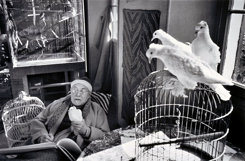Matisse seated holding a pigeon, three other pigeons are sitting on top of a near by cage