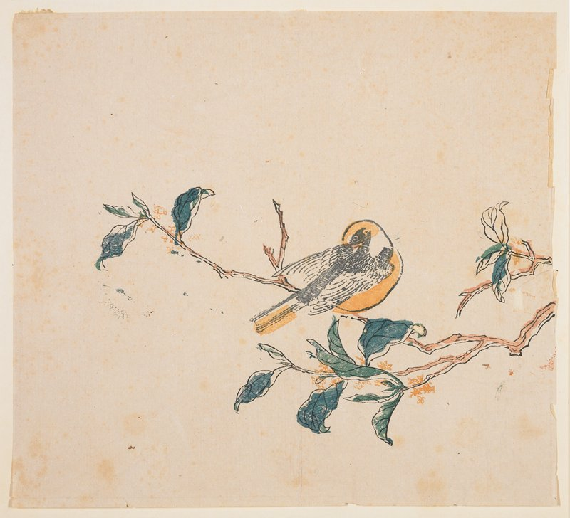 Bird on flowering branch; golden yellow crown, breast and tail; flowers of same yellow on branches
