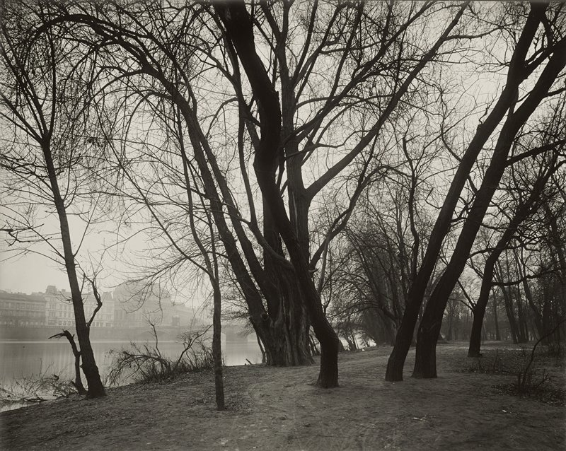 bare trees on a riverbank; buildings in background on opposite shore