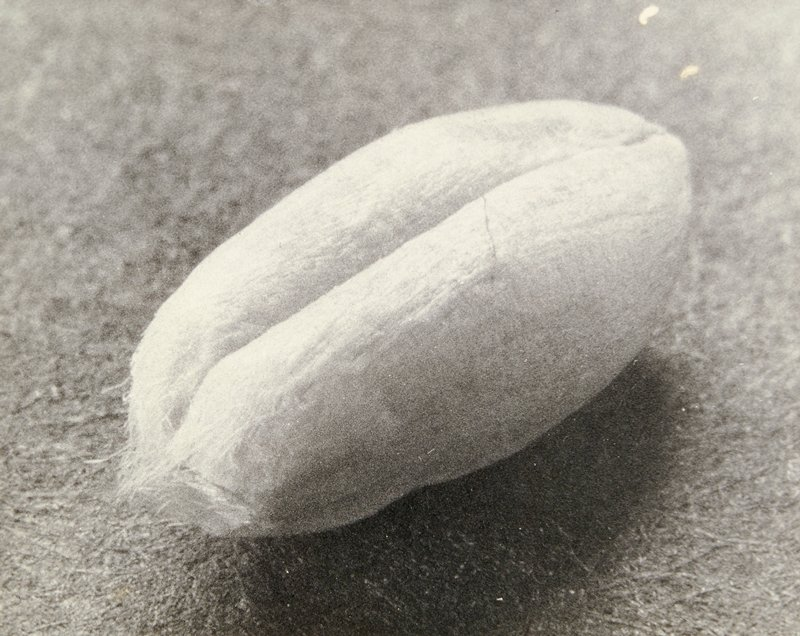 fuzzy oval object with cleft