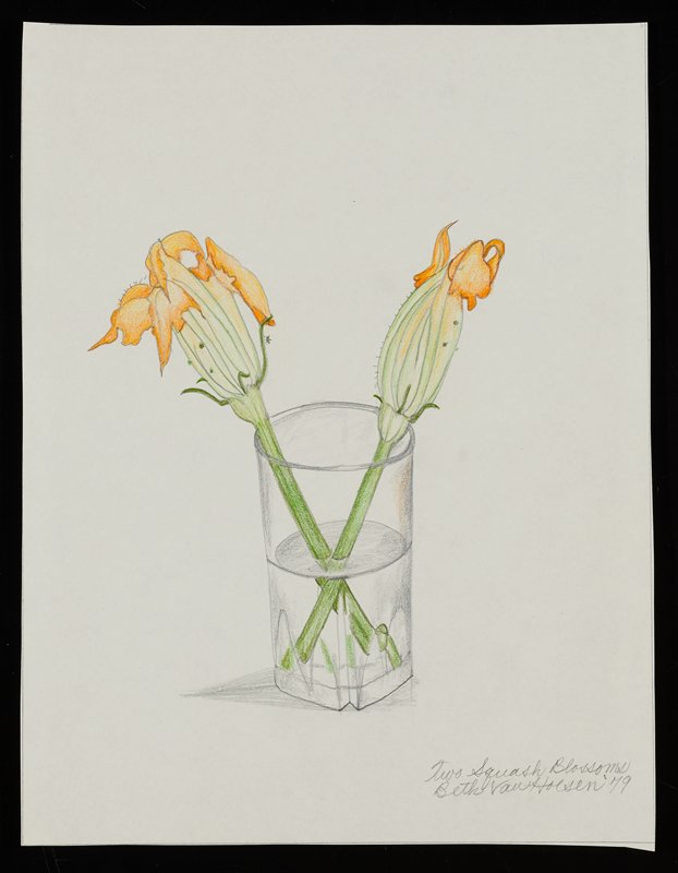 drawing of two orange squash blossoms with green stems in a glass of water; tiny insect on blossom on left