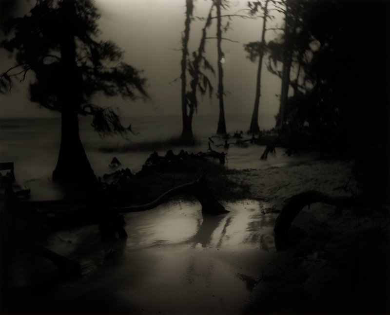 night landscape with bog in foreground with thick roots growing horizontally; silhouettes of tall trees in background in fog or water; mounted on board