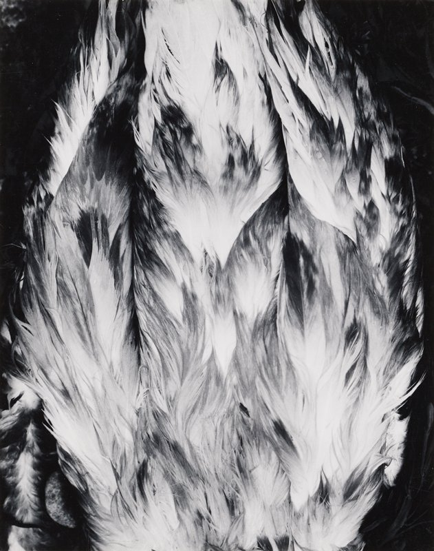 feathers pointing upward