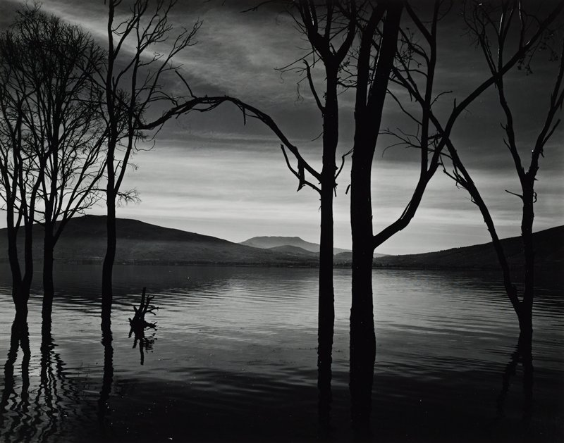 lake with small ripples at twilight or sunrise; silhouettes of bare trees rooted in water; low mountains at horizon line