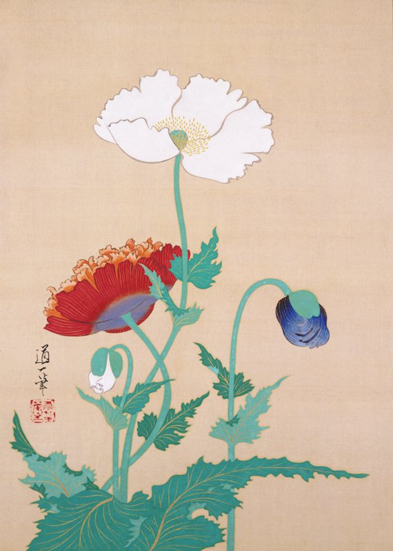 four poppies in different stages: white poppy in full bloom; orange-red at L facing away; bent, blue opening bud at LR; smaller, closed, white bud LL