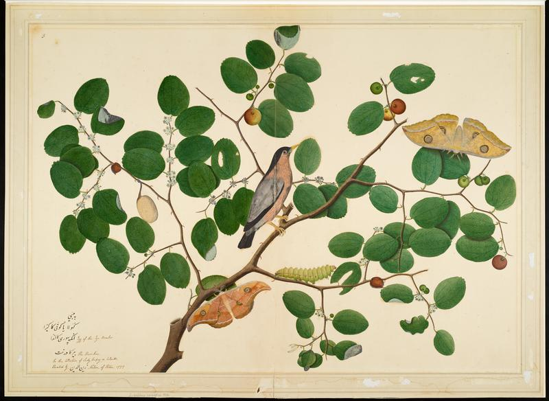 image of a tan, black and grey bird perched on a branch that has round leaves with two yellow moths and a green caterpillar; wood frame with gold along outer edge and white along inside edge