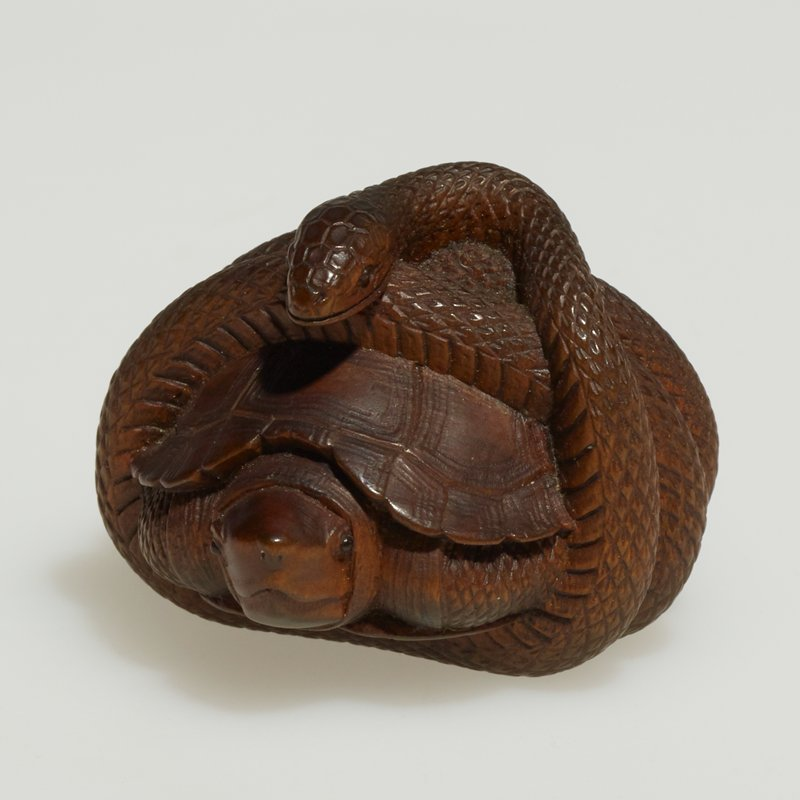 turtle wrapped in a snake's coils