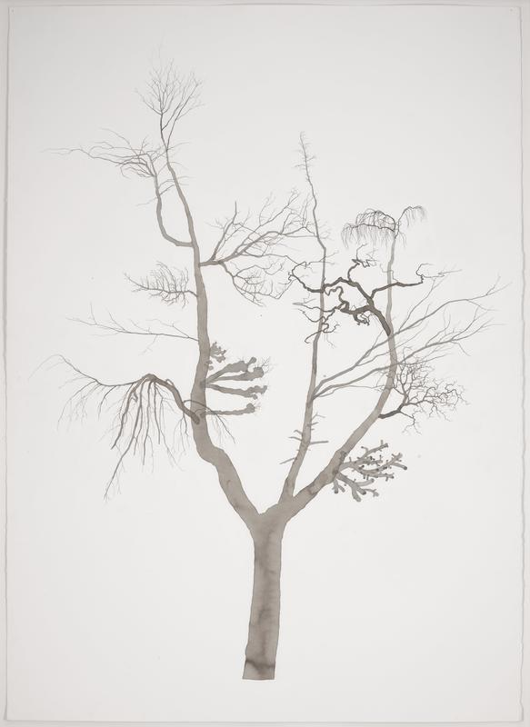image of a single, leafless tree rendered in faded transparent black ink; many thin delicate branches extend outward; simple, white background; certificate of authenticiy in a plastic sleeve on bottom center on back of frame