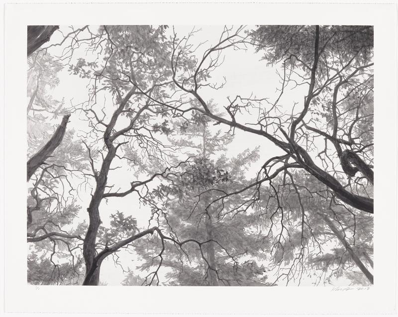 black-and-white image of a forested area; gradated trees against a white sky; two darker branches in center right edge; single dark, twisting branch in LLQ, extending upwards into URQ