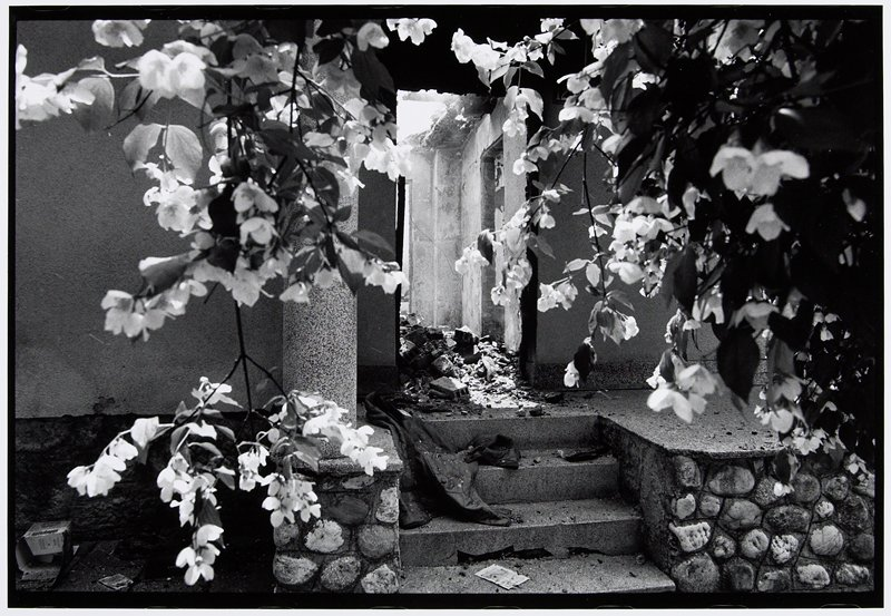 bombed-out house entry and interior seen through tree blossoms