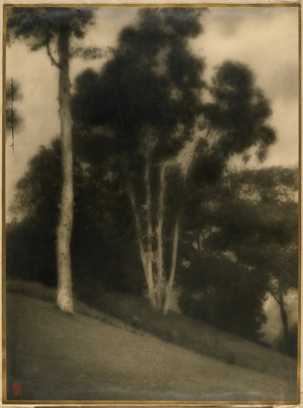 landscape with birches
