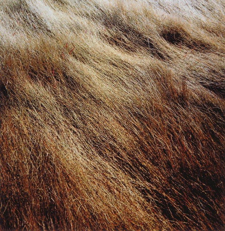 brown grass, Horseneck Beach, Massachusetts