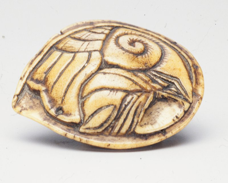 representation of animal shell with spiral and parallel curvilinear carvings on back, seven protruding nodules on underside