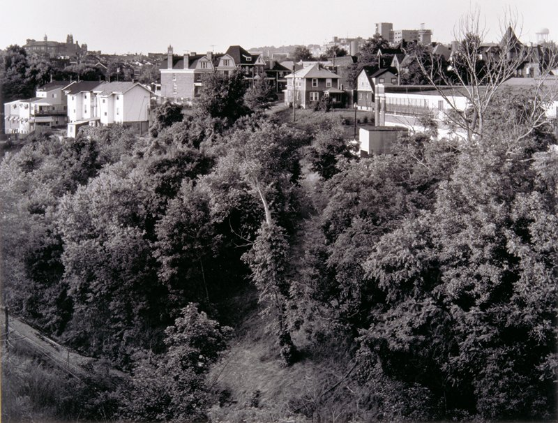 hillside; trees in foreground; trees in background