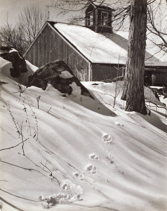 animal tracks in the snow on a small hill in foreground; barn in background