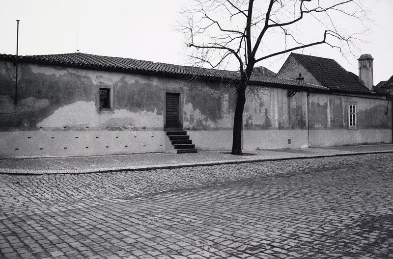 black and white photo of brick paved street with building and single tree in background