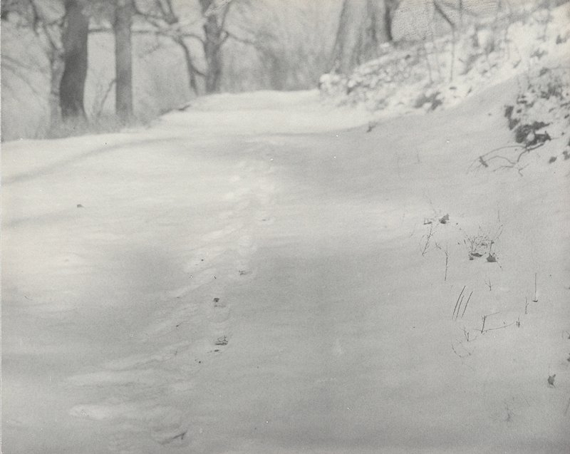 snow with footprints on a path; bare trees in background