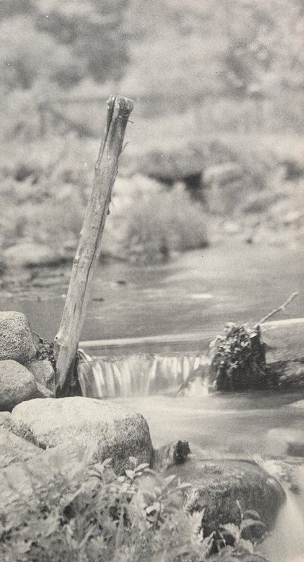 branch sticking up between smooth rocks at the edge of a brook with falling water