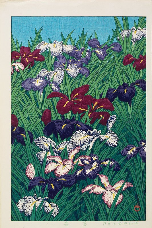thick patch of irises, with maroon, purple, white and purple, and white and maroon flowers