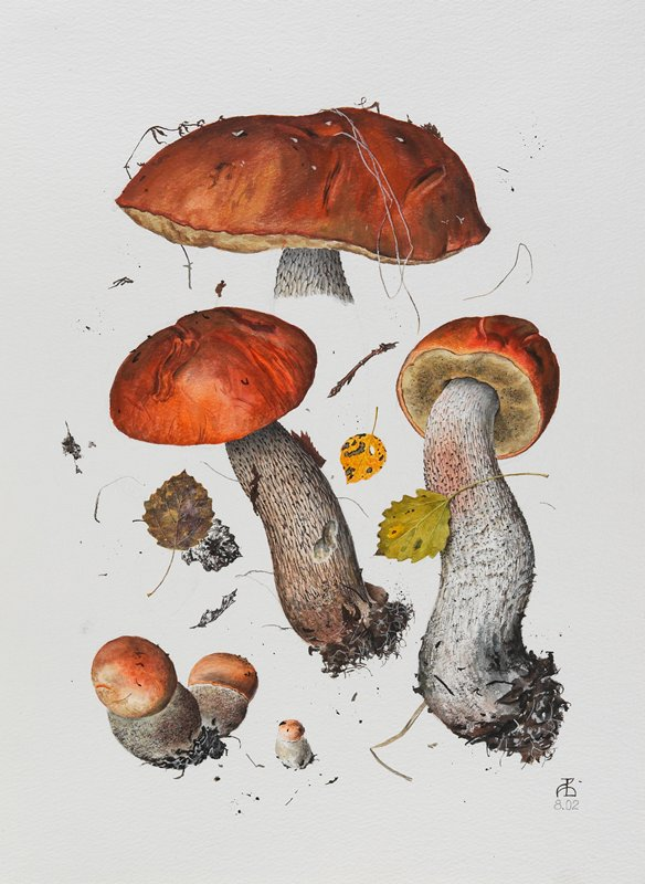 watercolor of 5 specimens of mushroom; 3 larger specimens have red caps, smaller have pink caps; leaf and twig specimens between and around mushrooms