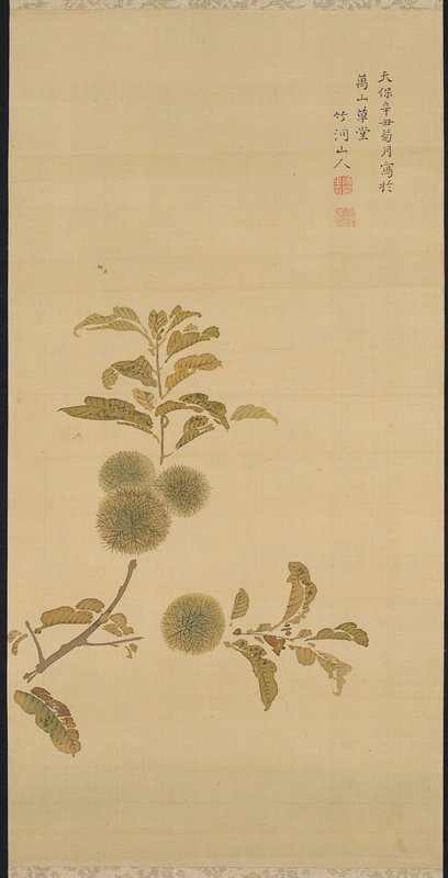 branch with green and brown leaves and four wooly seed pods; inscription and two seals, URC