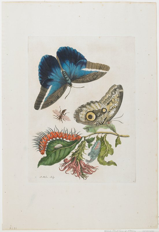 Plate 60