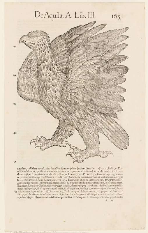 black and white; text on reverse side (eagle)