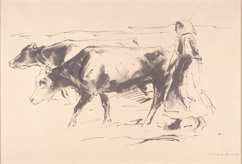 Two cows, woman herder walking behind