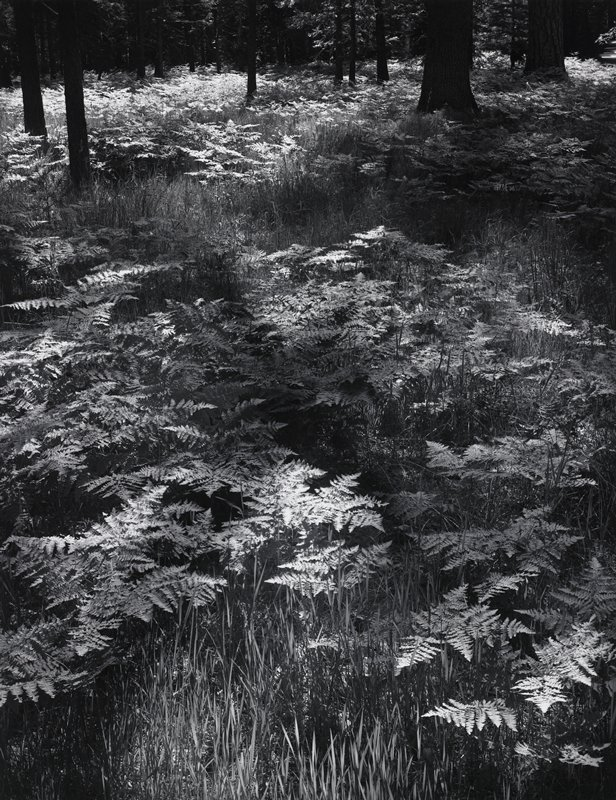 ferns and grasses growing under trees-tree trunk visible at top of image